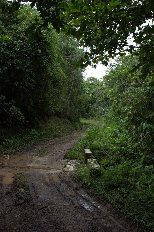 Wege durch den Regenwald.